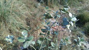 Rohini Rape Spot