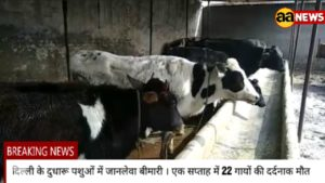 Burari News