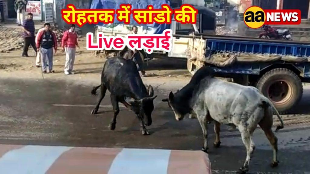 Hariyana Bull Fight