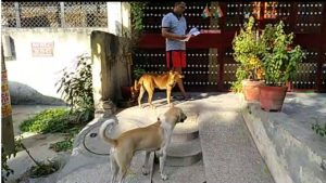 Golu & Kalu Dogs Rohini Sec 7
